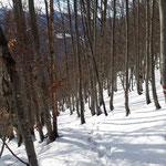 Hier begann das anstrengende Schneestapfen im steilen Wald