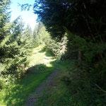 Idyllischer Wegverlauf durch den Wald und über Lichtungen