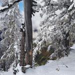 Kontrast: Unten der herbstliche Wald, heroben der verschneite Winter