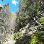 Waldweg retour