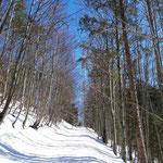Weiter geht es auf der stark verschneiten Forststraße zum Rundfunksender