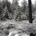 Wegverlauf vom kleinen Bärenstein zum Bärenstein