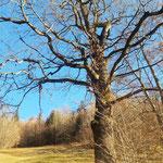 Wunderschöne Bäume säumen an einigen Stellen den Weg