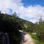 Durch Latschenwälder am Weg zum Einstieg