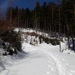 Unser Weg führt uns durch den Wald und über Lichtungen