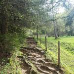 Erster Waldpfad Abschnitt