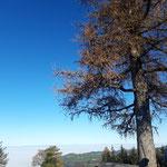 Am Grillenparz Gipfel