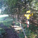 Hier teilt sich der Weg - Rechts zur Grünburgerhütte und zum Hochbuchberg, wir gehen geradeaus