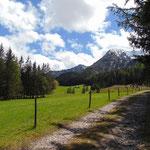 Über den Forstweg geht es bis zur Gabelung des Waldweges