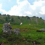Richtung Bärenfeuchtmölbing bietet sich ein wunderschönes Bild aus saftig grünen Almwiesen