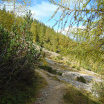 Weg zurück zur Bärenalm