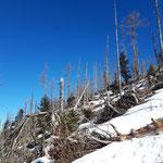 Auf einen Schlag beginnt sich die Landschaft zu verändern - aus dem Wald heraus und in diese karge Landschaft mit vielen kaputten Bäumen