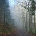 Und schließlich tauchten wir wieder in den Nebel ein