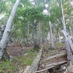 Teils wegloser Wegverlauf durch den Wald