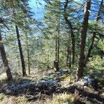 Bergab durch den Wald