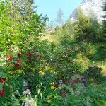 Durch den idyllischen Ackerwald