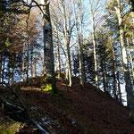 Der Gipfel des Grünaukogels