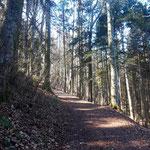 Zunächst geht der Weg mäßig steil ansteigend durch den Wald