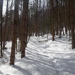 Weiter geht es durch den Wald