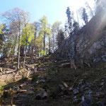 Hochwald mit spektakulären Felsformationen