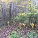 An dieser Stelle zweigt der Waldpfad von der Forststraße ab