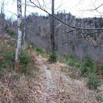 Den Wald haben wir gleich verlassen - durch diese schöne Landschaft geht es weiter bis zum Ringsattel