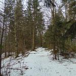 Gemütlicher Waldweg kurz vor dem Gipfel