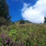 Am Ende des Waldes ist der Gipfel schon merklich näher gerückt