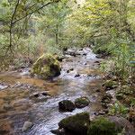 Rückweg durch das Pesenbachtal