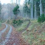 Nach der Jagdhütte wandern wir einige Minuten auf der Forststraße - an dieser Stelle zweigt der Waldweg wieder ab