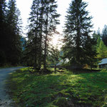 Über Langpoltenalm geht es überwiegend auf einer Forststraße, vereinzelte Abschneider auf der Wiese sind möglich