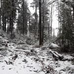 Weg vom kleinen Bärenstein zum Bärenstein