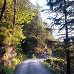 Der letzte Wegabschnitt auf der Forststraße