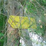 Schließlich verlassen wir den Hauptweg Richtung Steyersbergerreith - immer den Schildern zur Wildenalm folgen