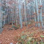 Durch den ersten Waldabschnitt geht es bergauf