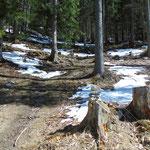 Vorsicht: Dieses Steinmännchen markiert die Abzweigung unseres Weges von der Forststraße