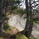Nachdem wir über die Piste aufwärts gewandert sind, geht es über diesen schönen Waldpfad weiter Richtung Gipfel