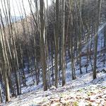 Verlauf des Weges durch den Wald