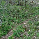 Bei dem Steinmännchen zweigt unser Weg ab - Vorsicht, geradeaus würde es direkt zu den Felsen weitergehen