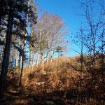 Am Weg zum Zederbauerspitz