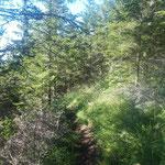 Weiter geht's über den Waldweg