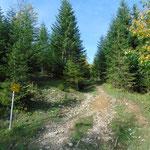 Der erste Teil der Tour verläuft teilweise steil durch den Wald