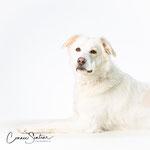 Loua - Connie Sinteur Fotografie