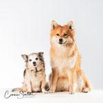 Qenya en Guapo - Dwergkeesje en Chihuahua - Connie Sinteur Fotografie