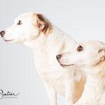 Diesel & Rebbel - Jack Russel - Connie Sinteur Fotografie