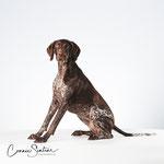 Bo - Duitse staande korthaar - Connie Sinteur Fotografie