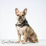 Cooper - French Bulldog - Connie Sinteur Fotografie