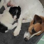 pup Wizzy  x Diego