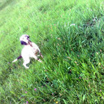 Perro de nuestro afijo, propiedad de Juan Carlos de Guipúzcoa