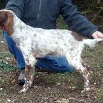 """Cachorra """"Berquir"""", propiedad de Alfonso de Portugal"""